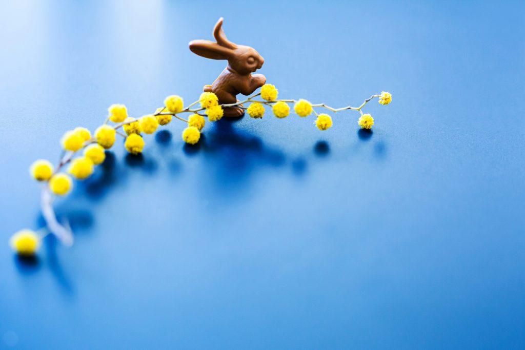 Ostergruß 2021: blauer Hintergrund mit einem Schokohasen an einer gelben Blüte © sh/fsf